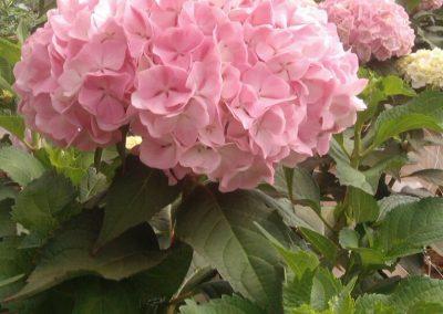 Nieuw: Light Pink