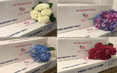 Overview of assortment of Flora Delight options for direct sales in boxes