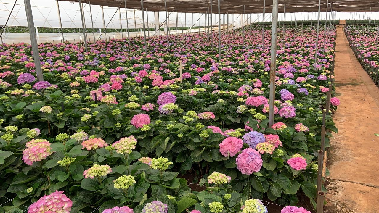 FloraDelightVerkoop (1)