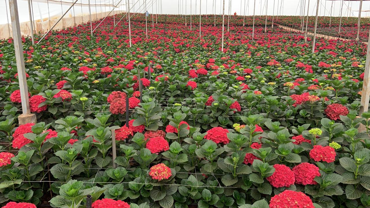 FloraDelightVerkoop (2)