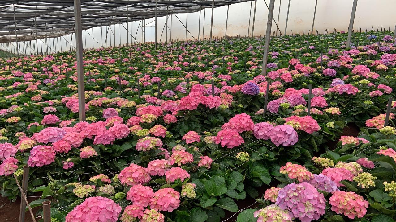 FloraDelightVerkoop (3)